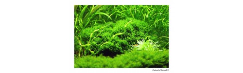 Mosses, Liverworts